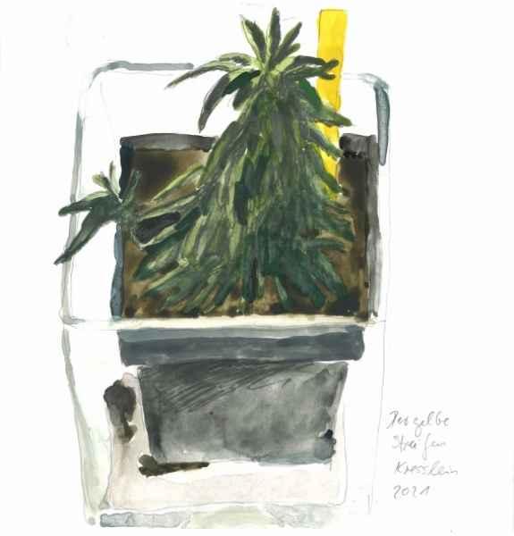 der gelbe streifen   15x15cm   aquarell