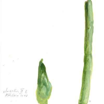 Amaryllis III b 15x15cm aquarell