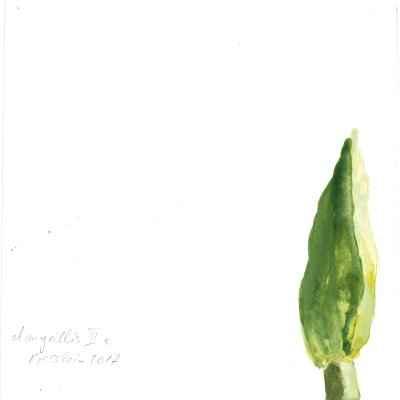Amaryllis III c 15x15cm aquarell