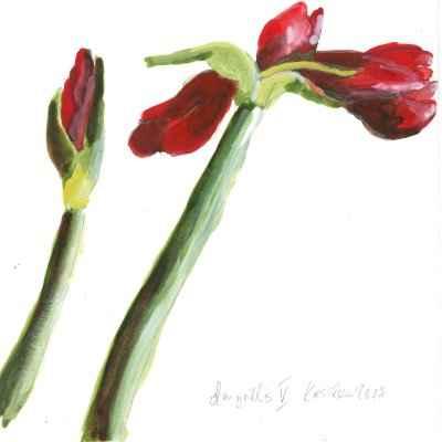 Amaryllis V 15x15cm aquarell