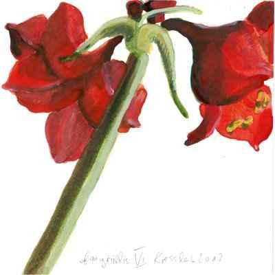 Amaryllis VI 15x15cm aquarell
