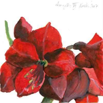 Amaryllis VII 15x15cm aquarell