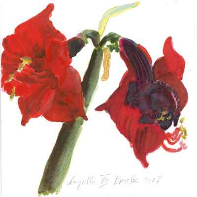 Amaryllis VIII 15x15cm aquarell
