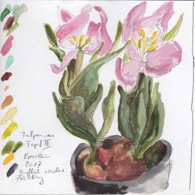 tulpen im topf III 15x15cm aquarell