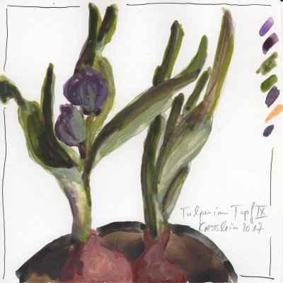 tulpen im topf IX 15x15cm aquarell