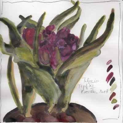 tulpen im topf XI 15x15cm aquarell