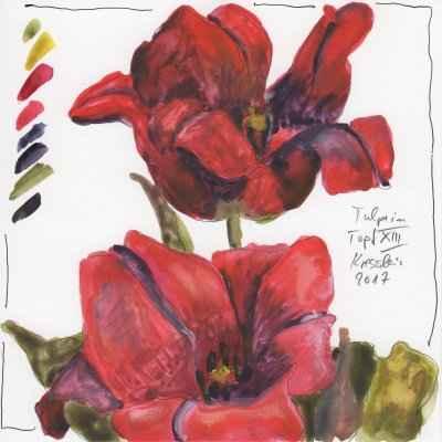 tulpen im topf XIII 15x15cm aquarell