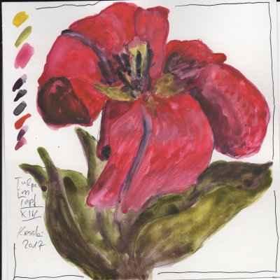 tulpen im topf XIV 15x15cm aquarell